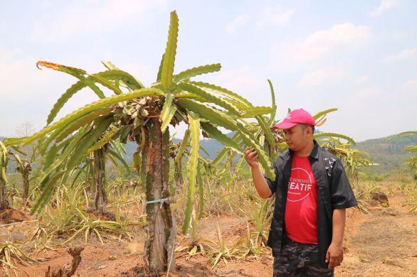 kebun indonesia berdaya